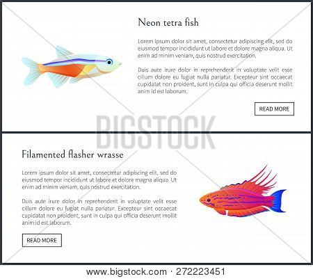 Neon Tetra Fish And Filamented Flasher Wrasse Posters Web Sites Set. Tropical And Exotic Biodiversit