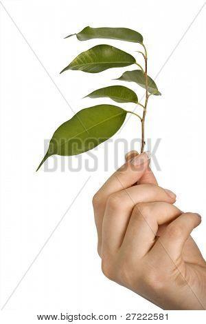 Jóvenes de la planta en los fondos blancos