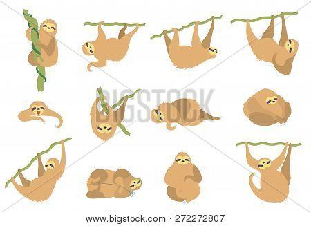 Vector Illustration Set Of Cute Character Sloth. Isolated Cartoon Baby Climbing Sloths. Hand Drawn J