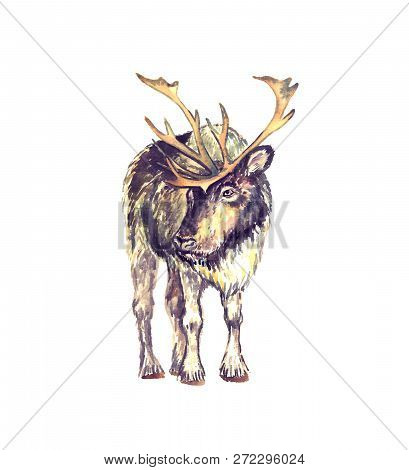 Reindeer Male Standing, Front View, Isolated Watercolor Illustration
