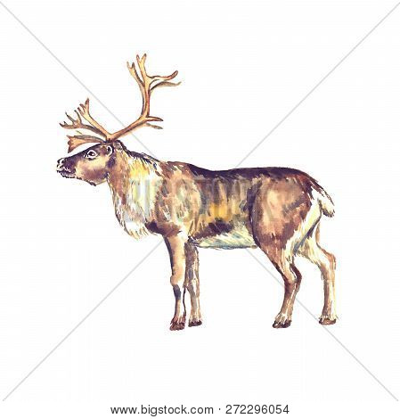Reindeer Male Standing, Side View, Isolated Watercolor Illustration