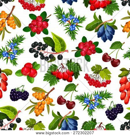 Berries Seamless Pattern Vector. Endless Texture Of Ripe Cherry And Bilberry, Rosehip And Dogrose, B