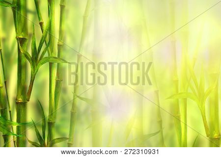 Bamboo Spa Background. Watercolor Hand Drawn Green Botanical Illustration With Space For Text. Water