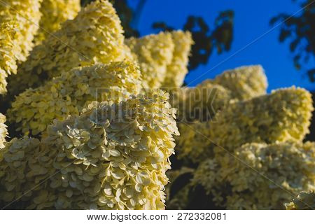 Bunches Of Yellow Flowers Growing Blooming With A Blue Sky
