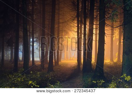 Mystic Night Forest With Shining Light. Dark Woodland Illuminated By Magic Light