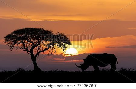 Typical African Scenery, Silhouette Of Large Acacia Tree In The Savanna Plains With Rhino, Rhinocero