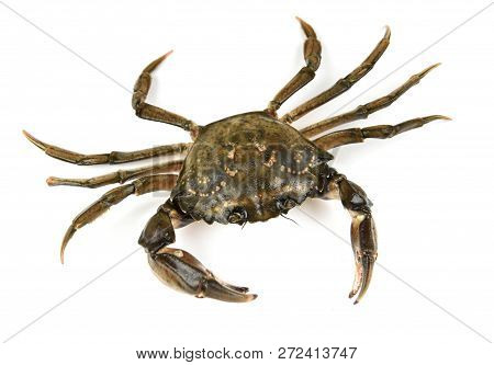 Crab. Black sea crustacean, isolated on white background poster