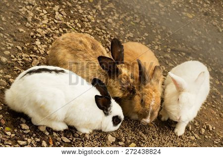 A Group Of Rabbit Eating Food At Rabbit Farm Or Zoo