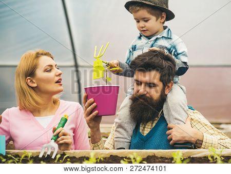 Family Garden. Family Garden In Greenhouse. Happy Family Work In Greenhouse Garden. Family Garden Cu