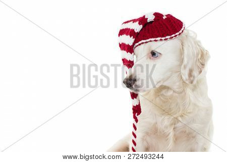 Christmas Dog Banner. Cute Puppy With Blue Eyes Wearing A Striped Red Santa Claus Hat Looking Side.
