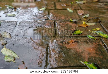 Waterproof Outer Cement Coating Wet Water. Stamped Concrete Pavement Slate Stone Tile Pattern, Decor