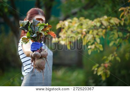 Photo of brunette woman with beetroot in garden