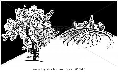 Vine Tree And Vineyard Drawing, Hand-drawn Vector Food Illustration For Vine Label And Social Media