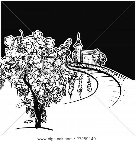 Vine Tree And Vineyard Drawing Detail, Hand-drawn Vector Food Illustration For Vine Label And Social