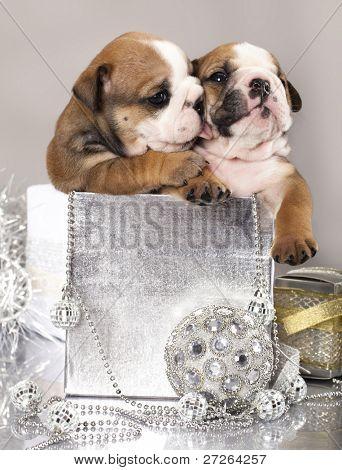english Bulldog puppy and gifts christmas