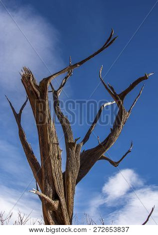 A Lone Dead Tree Displaying A Stark Contrast Against The Blue Sky In The Foothills Of Southern Color
