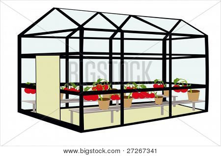 Vector illustration of hotbed with tomato