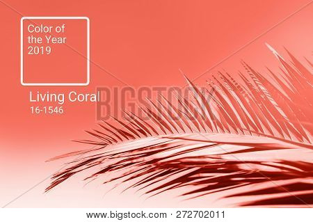 Living Coral Color Of The Year 2019. Main Trend Natural And Authentic Concept.