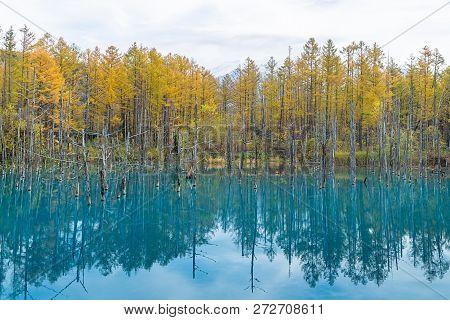 Blue Pond In Autumn, Hokkaido, Japan