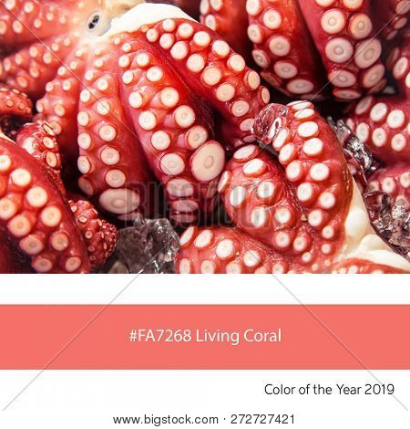 Fresh octopus as an example of the trend colour of the year 2019, Living Coral, with corresponding colour hex code.