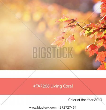 Maple leaves in autumn sunlight as an example of the trend colour of the year 2019, Living Coral, with corresponding colour hex code.