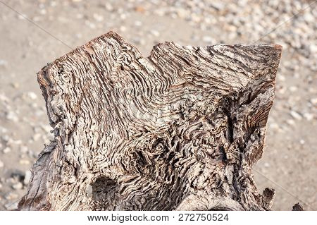 Rotten Stump. Close Up Of Old Rotten Wooden Stump In The Nature With Aged Lines And Texture