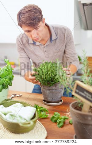 Freshly Harvested Thyme In Hands.men In Kitchen At Home