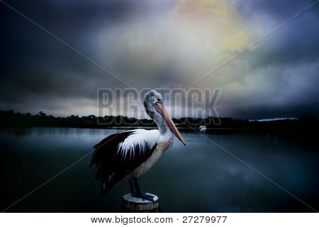 pelican on a jetty with a storm brewing