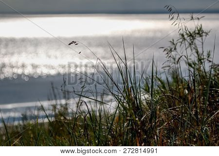 Coast With Grass And Baltic Sea. Landscape Of Baltic Sea Coast With Shimmering Water. Long Grass On