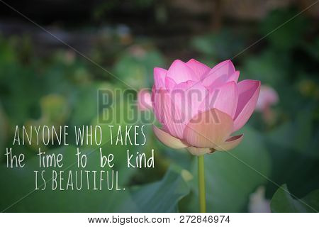 Inspirational Quote-anyone Who Takes The Time To Be Kind Is Beautiful. With Soft Pink Lotus Water Li