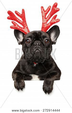 French Bulldog Puppy With Red Carnival Antlers Of The Christmas Deer Above Banner, Isolated On White