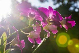 Blossom Purple Orchids With Dark Background Against Sunlight