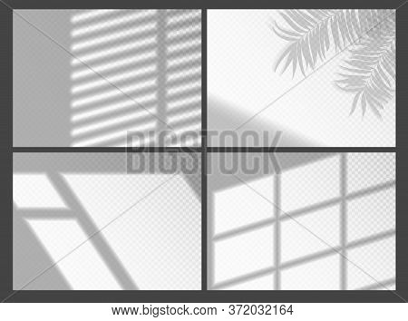 Shadow Overlays For Mockup Presentation. Organic Palm Tree Shadow And Jalousie Shadows Window Frame