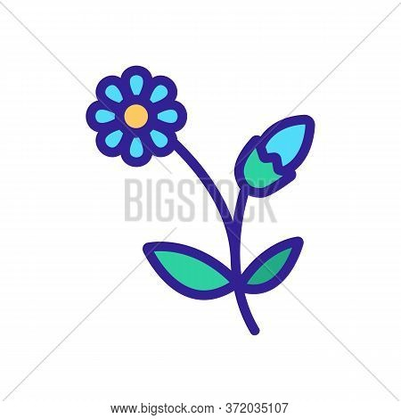 Chamomile Blooming Flower Icon Vector. Chamomile Blooming Flower Sign. Color Symbol Illustration