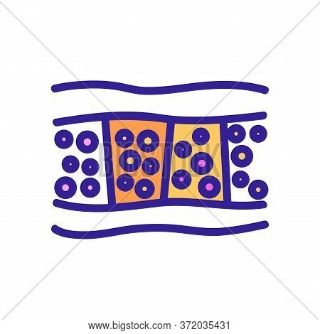 Cellulite Anatomical Section Icon Vector. Cellulite Anatomical Section Sign. Color Symbol Illustrati
