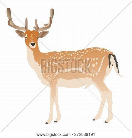 Elegant Sika Deer Full Body Isolated On White Background, Vector Illustration. Cartoon Stylized Fore
