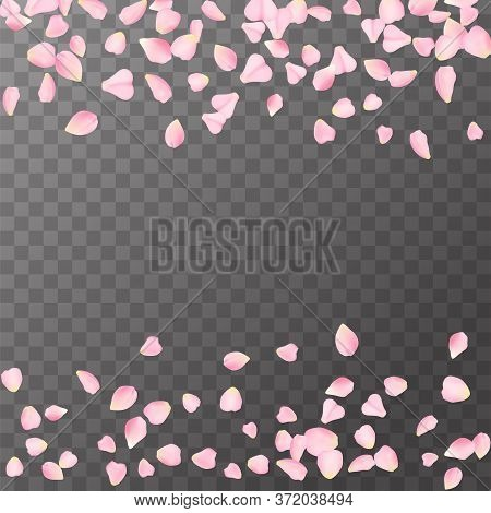 Abstract Romanic Background With Flying Pink Rose, Cherry Or Sakura Petals Petals Isolated On A Tran