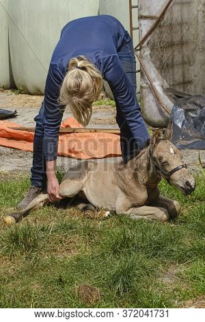 Cute Newborn Colt Lying In Grass On A Spring Day. Woman Holding The Stallion Foal