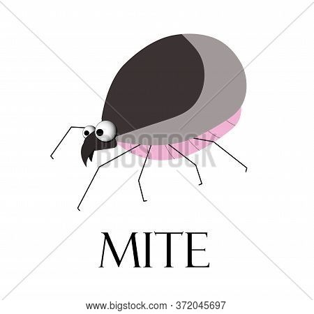 Mite. Teak Is A Blood-sucking Insect. The Parasite Is A Tick. Summer Epidemic. Lyme Disease.