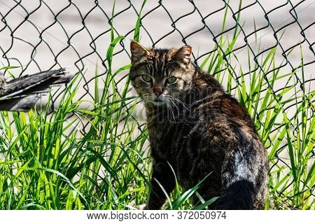 A Street Cat Sits By A Mesh Fence On A Sunny Day, Turning Back.