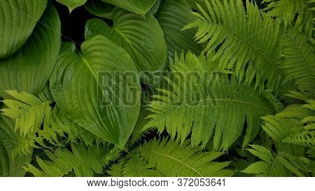 Closeup Of Tropical Leaf Texture Background Of Fern And Jungle Plants. Exotic Fresh Green Leaf Backd