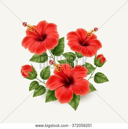 Realistic Beautiful Hibiscus Flower. Exotic Tropical Plant. Vector Illustration Eps10
