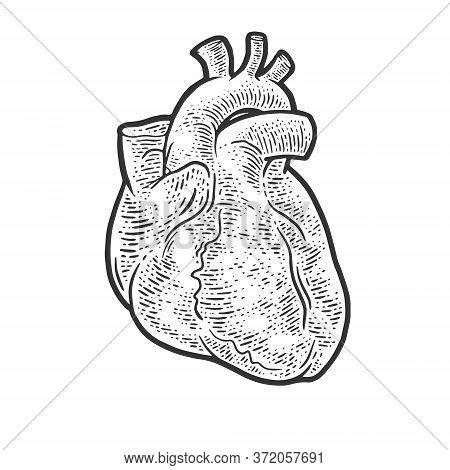 Anatomical Human Heart Sketch Engraving Vector Illustration. T-shirt Apparel Print Design. Scratch B