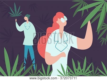 Concept Grow Cannabis, Cultivation, Production Cbd . Professional Worker In Lab Coat Or Pharmacist R