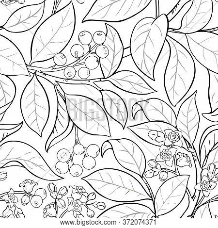 Sandalwood Branches Vector Pattern On White Background