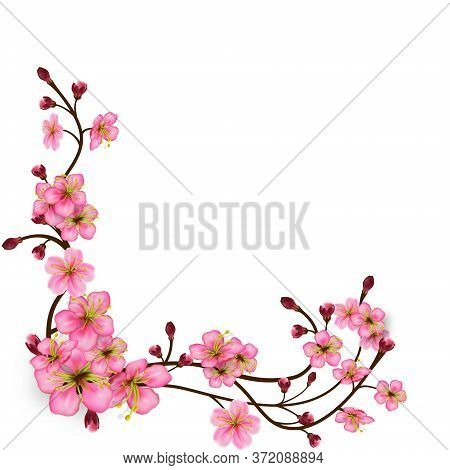 Corner Pattern Of Sakura Branches With Flowers And Buds. Detailed Cherry Blossoms. Spring Tree Branc