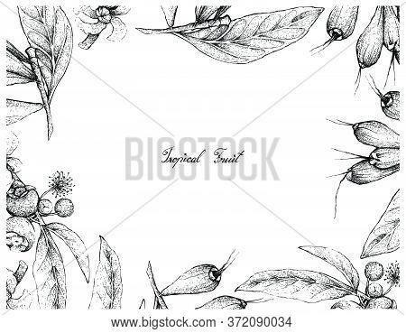 Tropical Fruit, Illustration Frame Of Hand Drawn Sketch Of Goiaba De Anta, Mess Apple Or Bellucia Gr