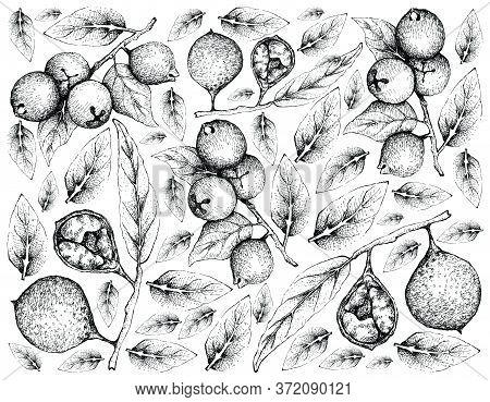 Tropical Fruits, Illustration Wall-paper Of Hand Drawn Sketch Fresh Ivru Wood Or Siphonodon Celastri