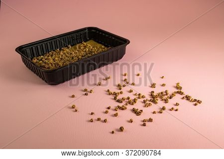Chard Seeds Ready For Sowing On A Pink Background