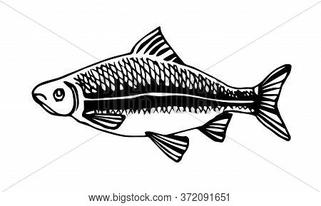 Freshwater Fish, Roach, Bream, For Decorative Ornaments And Patterns, Vector Illustration With Black